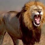 10 อันดับยอดสัตว์อันตรายสำหรับมนุษย์