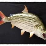 10 อันดับ ปลาที่น่ากลัวที่สุดในโลก