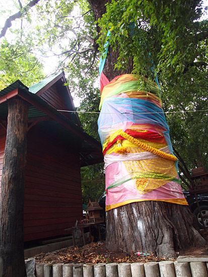 ต้นไม้เก่าแก่ร้อยปีใน กทม.