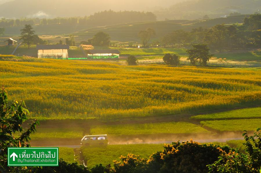 boon-rawd-farm (6)