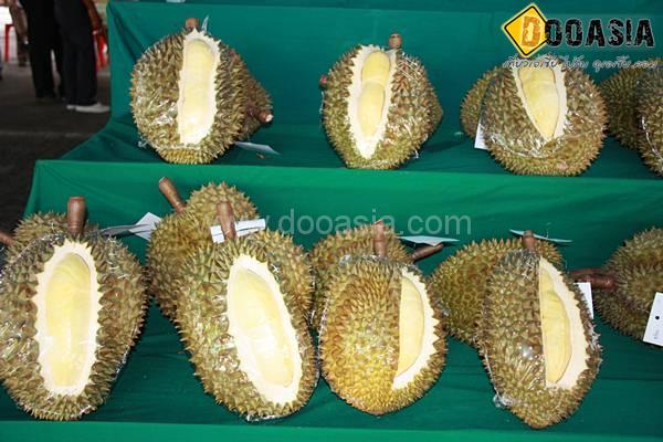durianfestival (11)