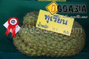 durianfestival (21)