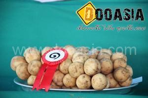 durianfestival (22)