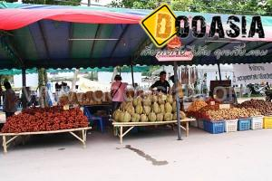 durianfestival (28)