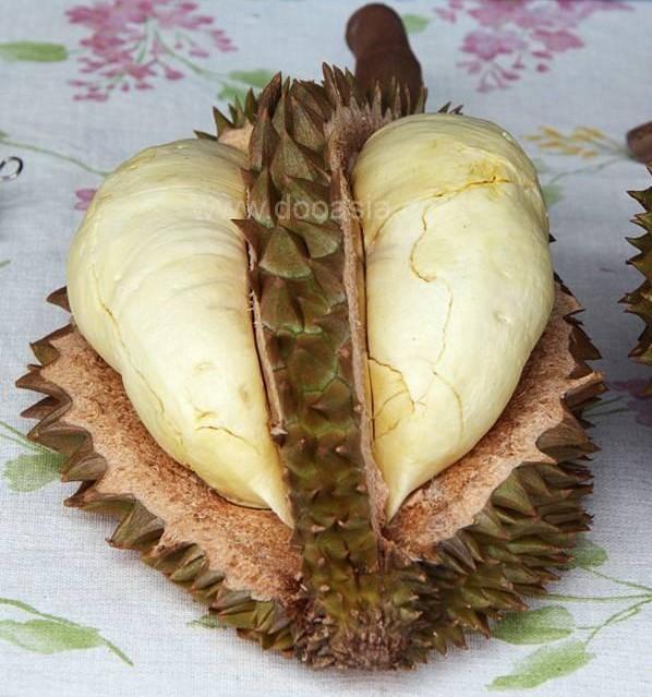 durianfestival (57)