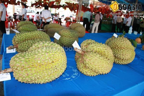durianfestival (7)