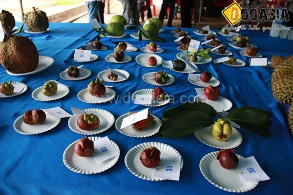 durianfestival (8)