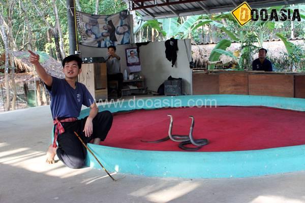 king-cobra (12)