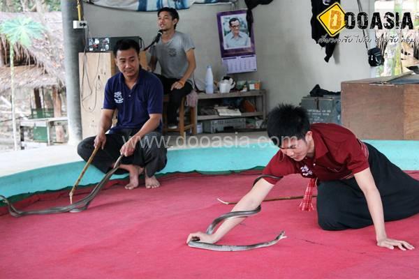 king-cobra (22)