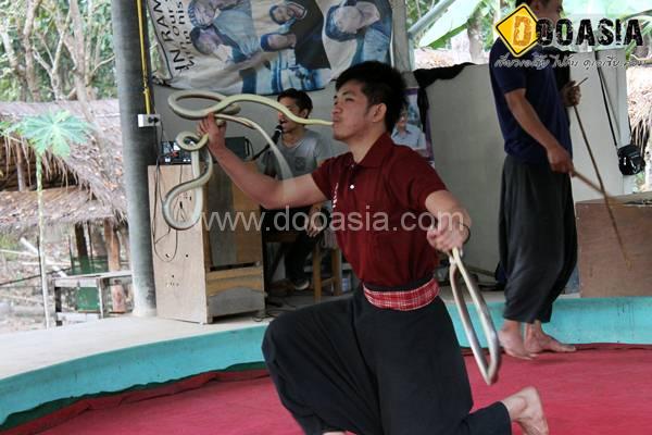 king-cobra (23)