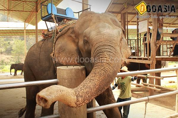 maetang-elephant-camp (14)