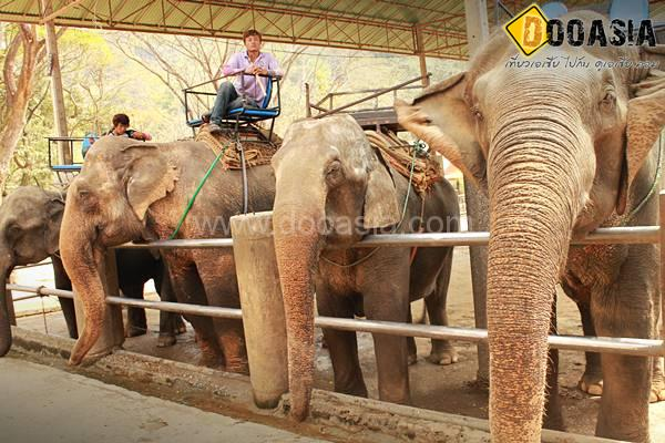 maetang-elephant-camp (29)