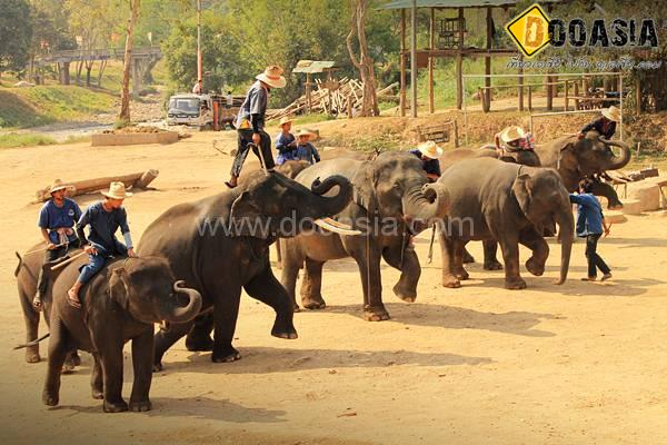 maetang-elephant-camp (49)