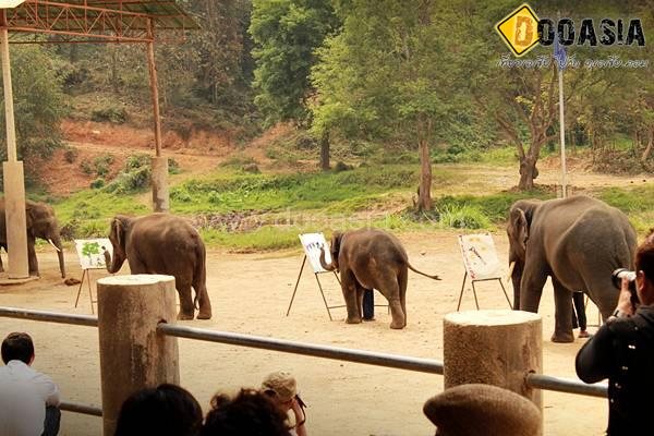 maetang-elephant-camp (7)