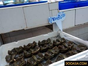 otogor-market (36)