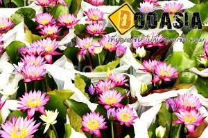 talingchan-floating-market (49)