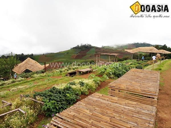 tanathon-farm (15)
