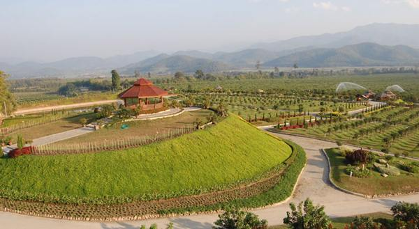 tanathon-farm (19)