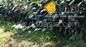 tea-garden101 (5)