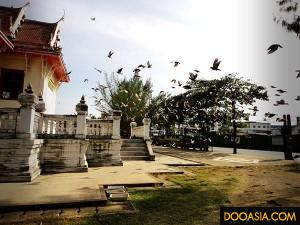 luangpor-dam (3)