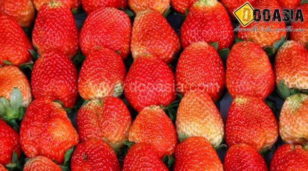 strawberry-maesai (11)