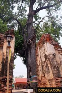 วัดโพธิ์ประทับช้าง (2)