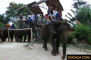 Huahin-safari (1)